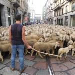 Sheep+Streets+Milan+During+Filming+Last+Shepherd+yJZ2mZ8WESvl